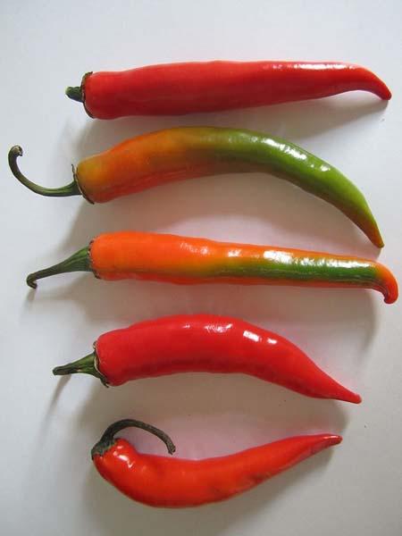 S Chili Paprika