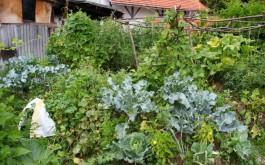 ...biljke međusobno bolje surađuju