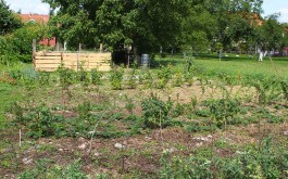 Bobičarska plantaža