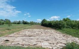 Malčirana kartonima buduća bobičarska plantaža