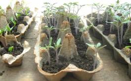 Mlade flance u kartonima od jaja