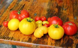 Razne vrste paradajza