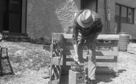 prirodno sredstvo za zaštitu drveta protiv gljvica