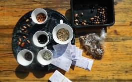 solidarna razmjena sjemenki